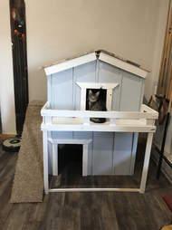 family builds house for kitten