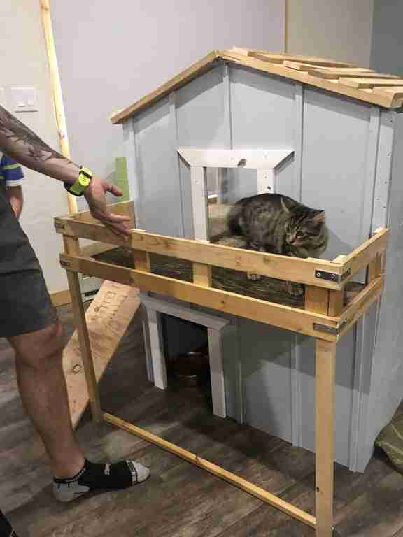 family builds house for kitten