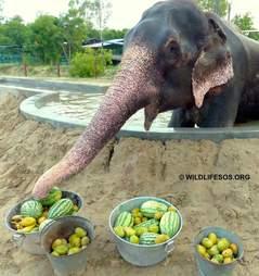rescue elephant raju india