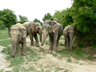 rescue elephant india