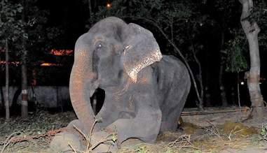 begging street elephant rescue india