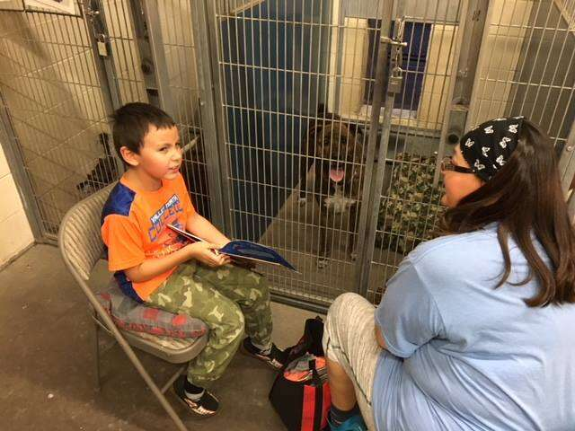 dog rescue shelter calming