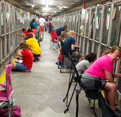 dog calming shelter rescue
