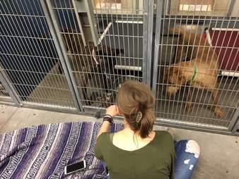 rescue dog shelter fireworks