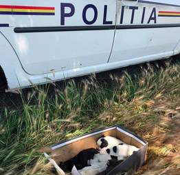 puppies found abandoned in a shoebox