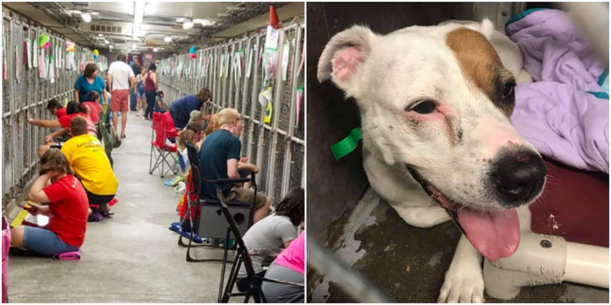 Over 100 People Show Up At Shelter To Comfort Dogs During Fireworks