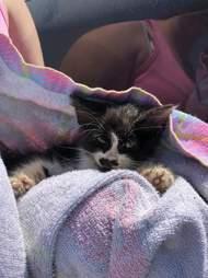 kitten found on a sidewalk