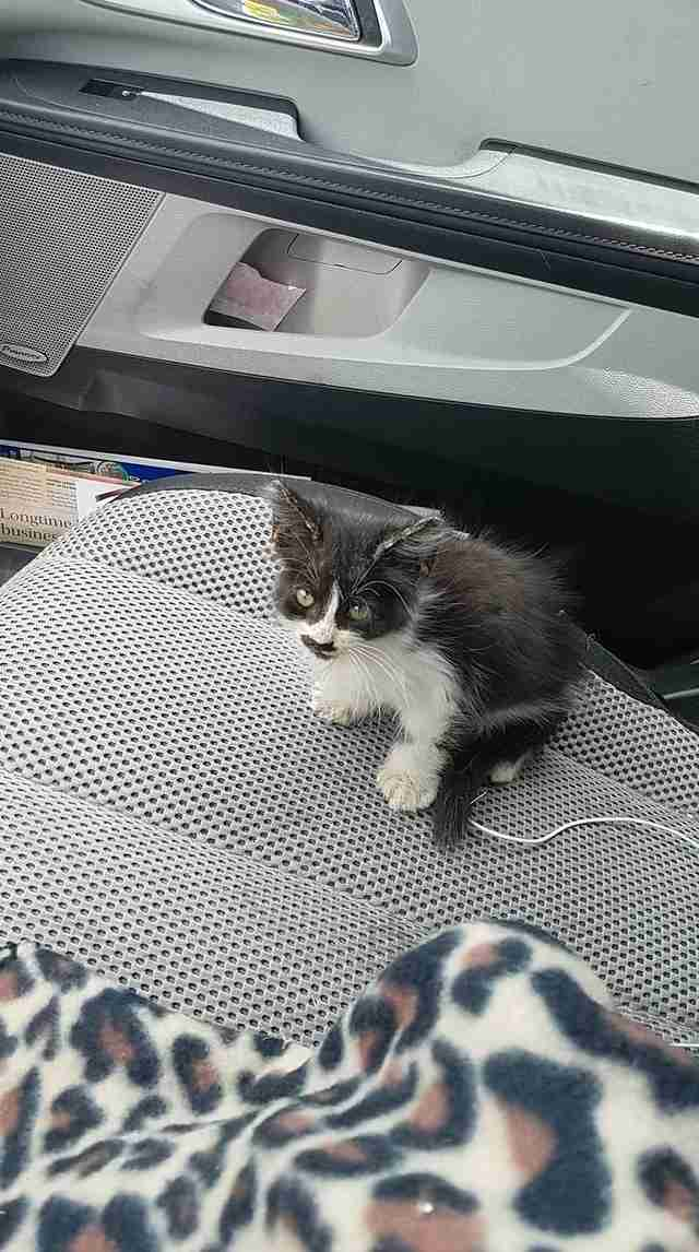kitten found on a sidewalk