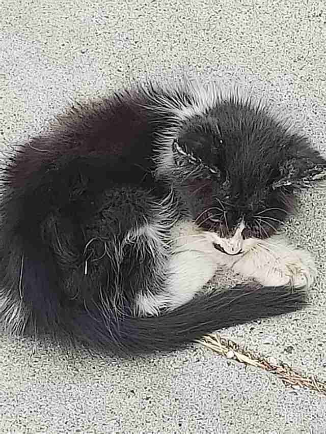 kitten abandoned on a sidewalk