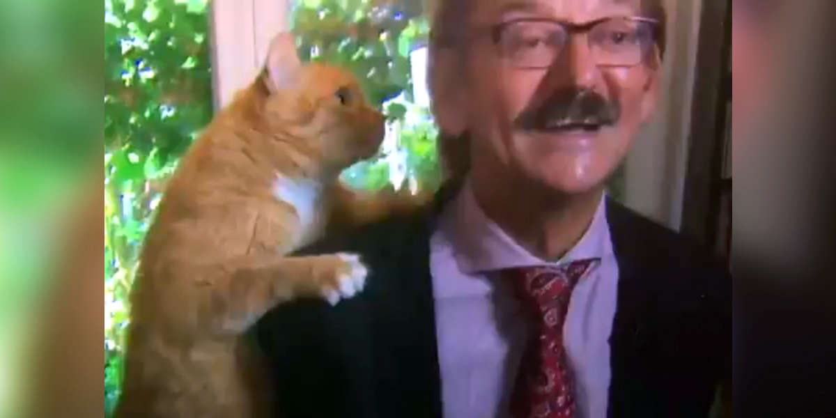 Cat Decides To Crash His Owner's Live TV Interview