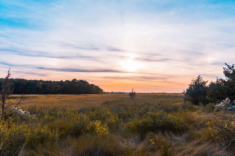 caumsett state park