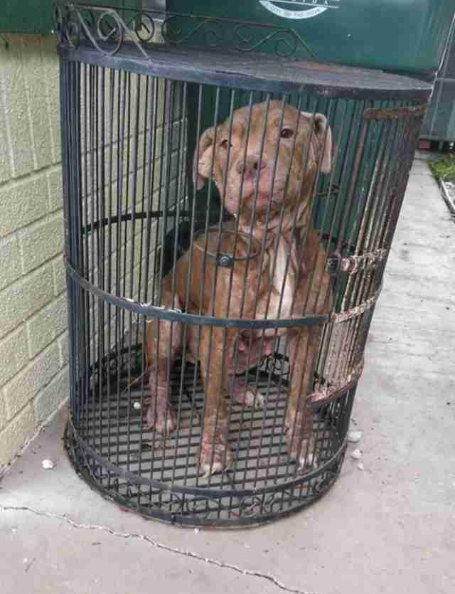 Dog in birdcage in front of shelter