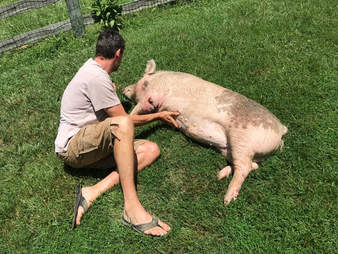 Man cuddling with injured pig