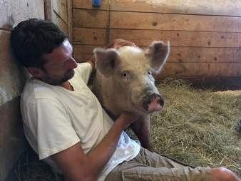 Man cuddling with injured pig in barn