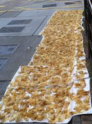 Totoaba fish bladders drying for sale in China