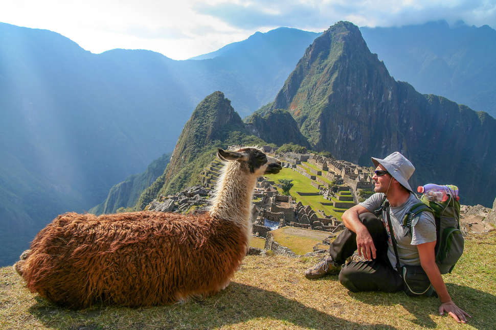 Tourist Llama