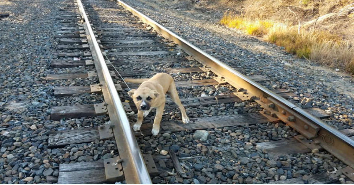 Man Finds Puppy Tied To Railroad Tracks All Alone