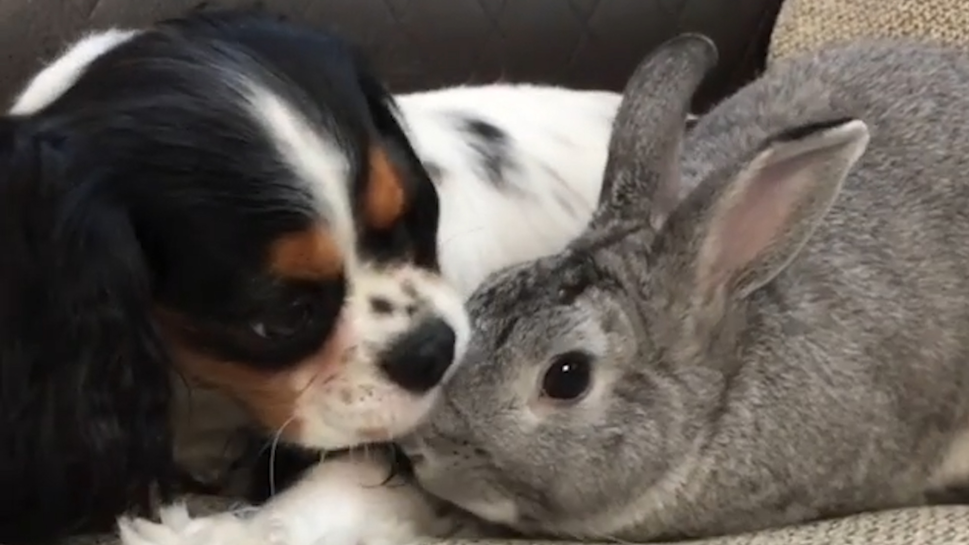 Animal Odd Couples Youtube bunny helps her dog best friend through the hardest time