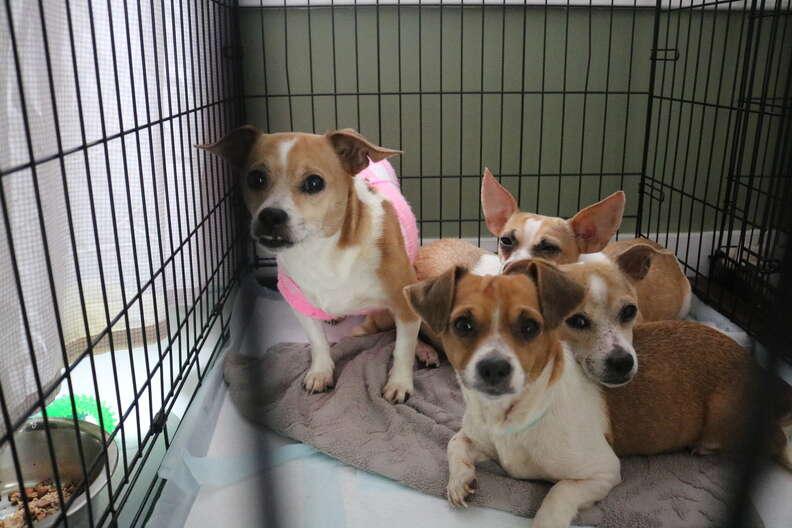 Rescued dogs inside kennel