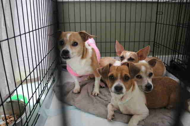 Rescued dogs inside kennel