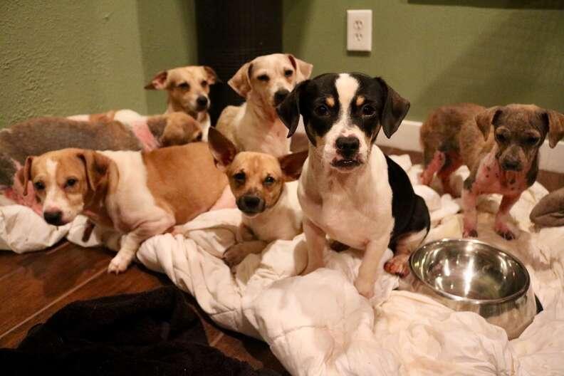 Dogs huddled on blanket