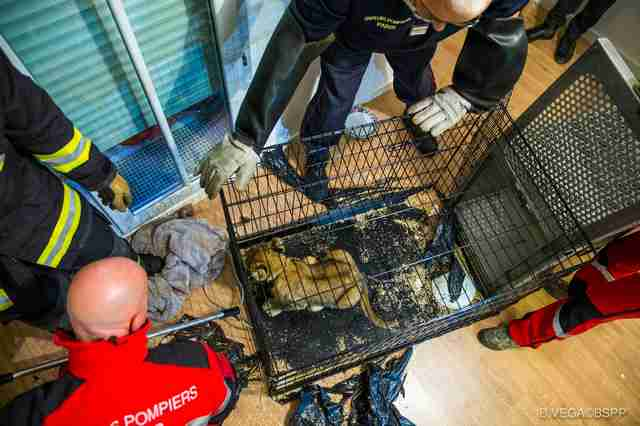 Lion cub found in Paris apartment