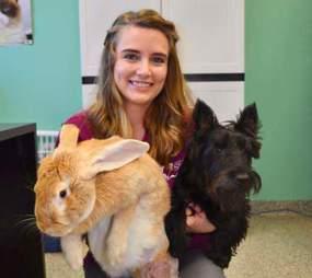 rabbit giant rescue