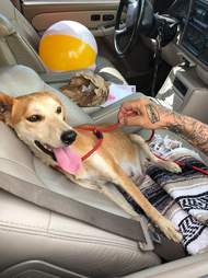 Mama the dog rescued from riverbed