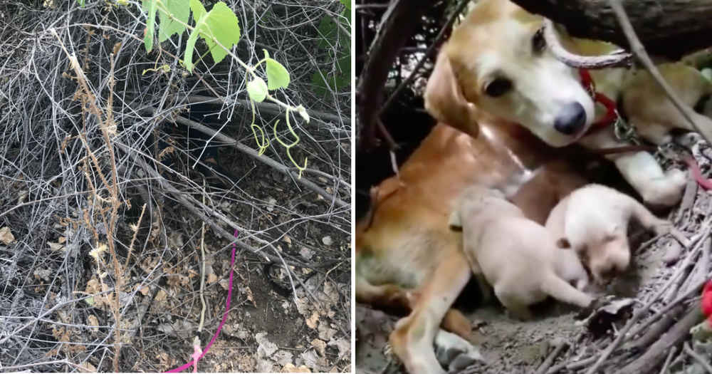 Abandoned Dog Shows Rescuers The Secret She's Hiding In A Thicket