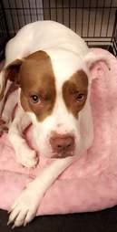 Frappucino dog abandoned adopted