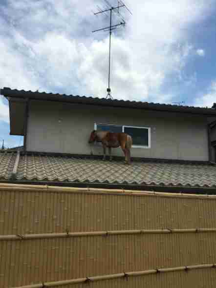 Leaf the horse on a roof in Mabi, Japan