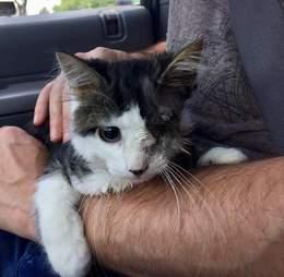 Man holding cat with injured eye