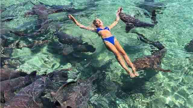 Woman in water with group of nurse sharks
