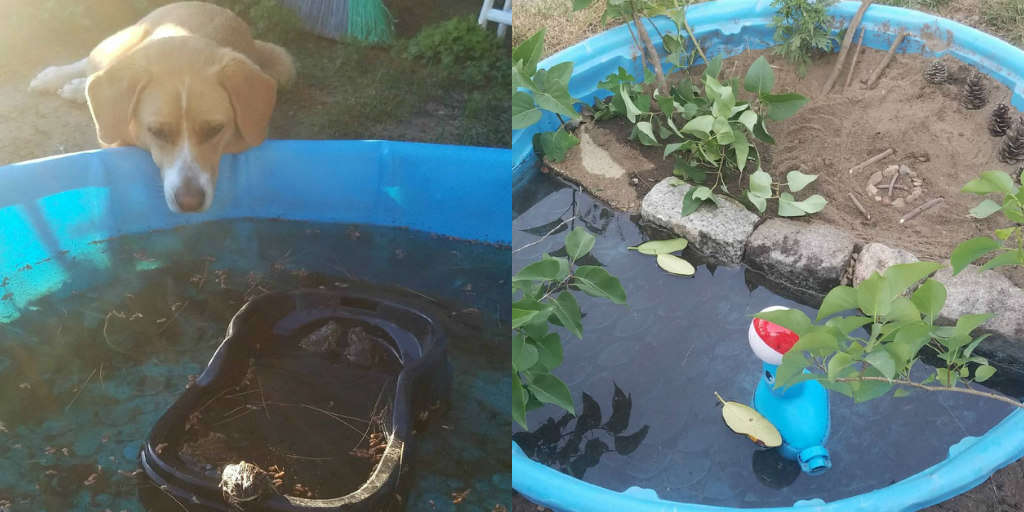 Dog Is Obsessed With Toads — So Her Family Builds Toad 'Hotel' In Backyard