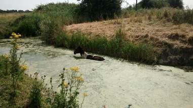 horse stuck in river