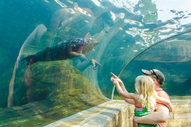 Manatee, dad, and daughter at the St. Louis Zoo.
