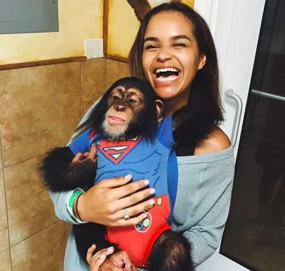 chimp zoo selfies