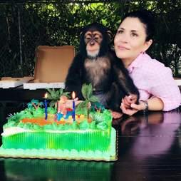 chimp zoo miami