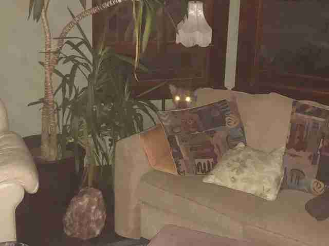 Mountain Lion Breaks Into Oregon Home, Naps On Couch - The Dodo