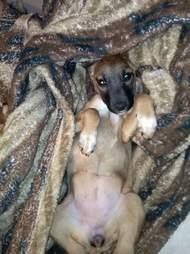 Dog lying in blankets