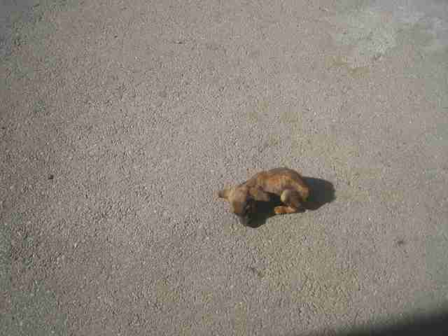 Tiny puppy on road
