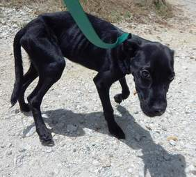 Skinny dog on leash