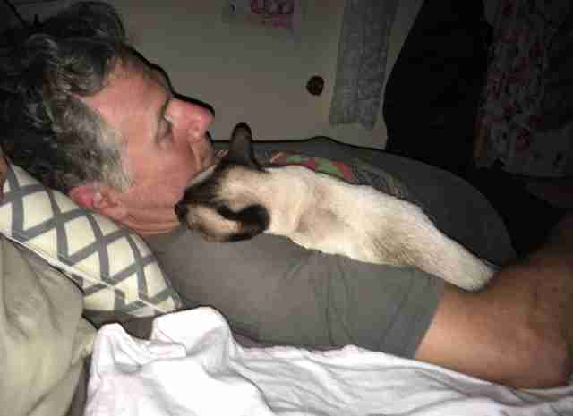 Stray Siamese who was afraid of men snuggles up to rescuer