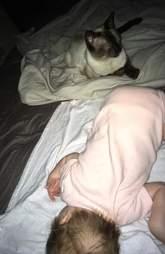 Stray Siamese cat with newborn baby