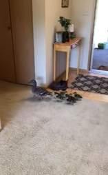 Family of ducks explores lakeside home