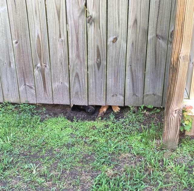 Nachbarin Heimlich Beobachtet