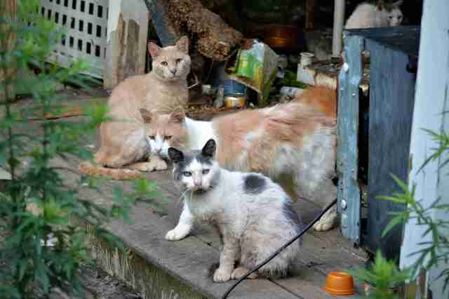 187 cats rescued from one home