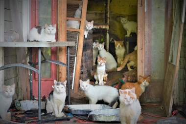 187 cats rescued