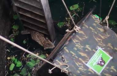 Leopard who fell in a well in India