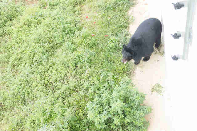 Bear saved from bile farm at sanctuary in Vietnam